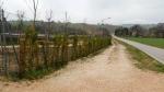 Manutenzione impianti fotovoltaici Marche, Piantumazione siepi impianti fotovoltaici Marche, Manutenzione del verde impianti fotovoltaici Marche, Sfalcio erba impianti fotovoltaici Marche